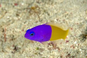 20150903_alor-house-reef_0001