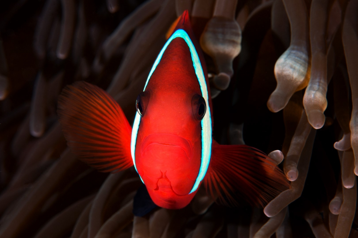 20150903 Alor House Reef 0009 (Large)